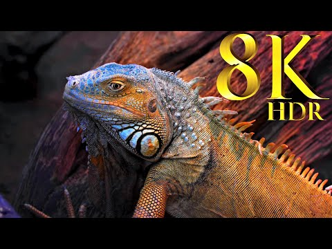 Collection Of Animals 8K HDR 60FPS