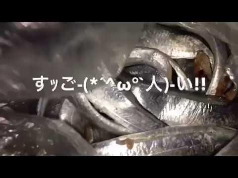 【えっ、2桁!?(*´▽`*)】南芦屋浜リアルタイム