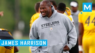 James Harrison Strength Training Workouts for Football   Muscle Madness