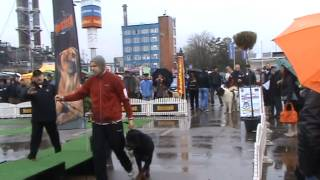 Rottweiller Attacks Another Dog At Dog Show