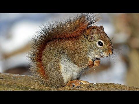 Children-View(4K): Animal Beauty - UHD SlideShow - Gentle Worship (Instrumental)