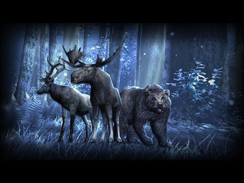 Video of Forest HD