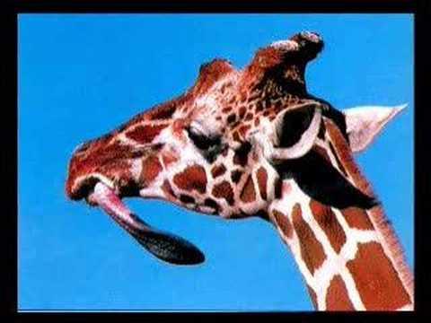 Evidence_Giraffe