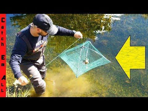 Video UMBRELLA FISH TRAP! Catches Crawfish, Fish, and More! download in MP3, 3GP, MP4, WEBM, AVI, FLV January 2017