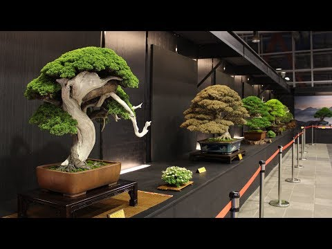 Hwa Fong Bonsai exhibition 2017