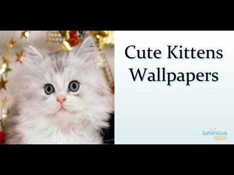 Video of Cute Kittens Wallpapers