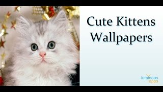 Cute Kittens Wallpapers YouTube video