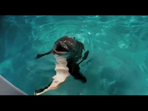 Dolphin Tale - Original Theatrical Trailer