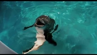 Nonton Dolphin Tale   Original Theatrical Trailer Film Subtitle Indonesia Streaming Movie Download