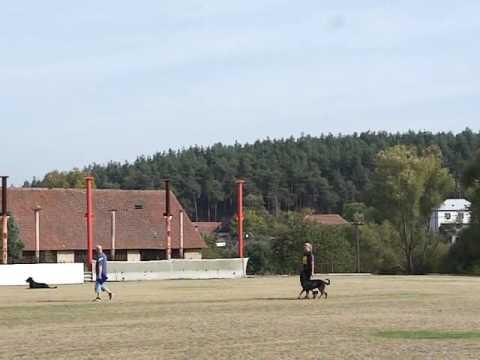 Czech championship- Ame Magnanime Dorothée d'Or 1.PLACE at Upr1 (видео)