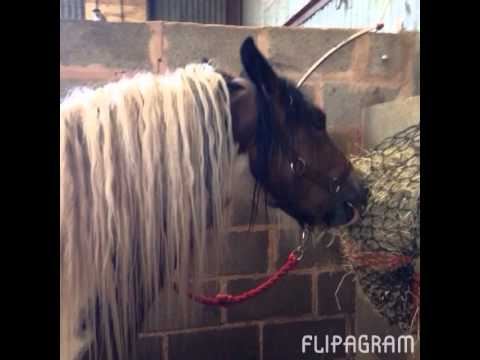 Video My horse JJ sorry that there is no sound xxx download in MP3, 3GP, MP4, WEBM, AVI, FLV January 2017