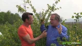 #1051 Vierbeeren Fourberries eine neue Obstart - mit Karl Ploberger