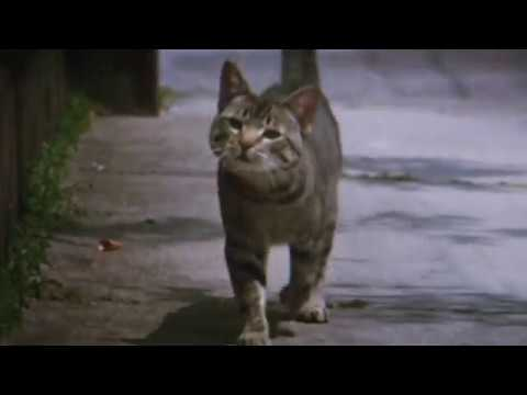 "Trailer For ""Cat's Eye"" (1985)"