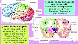 Мозг: общие принципы. Центры потребностей — Дубынин В.А. — видео