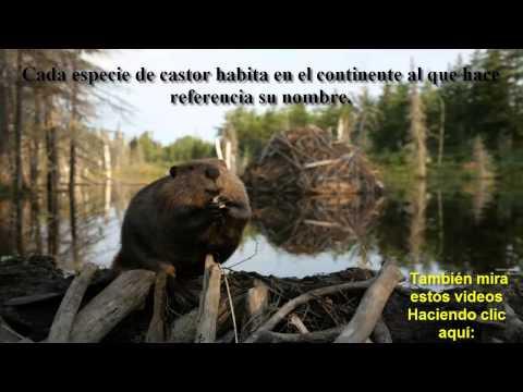 Animales salvajes en peligro de extincion vida silvestre alarmante retroceso animalesextintos11 - Videos animales salvajes apareandose ...