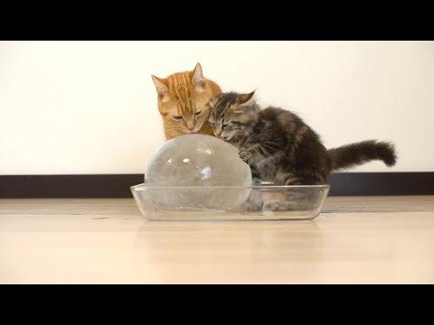 10 gatti alle prese con una sfera di ghiaccio