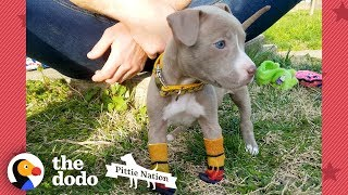 Puppy Found In Duffel Bag Is Pure Joy  | The Dodo Pittie Nation by The Dodo