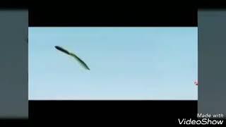 Kungfu chicken songs