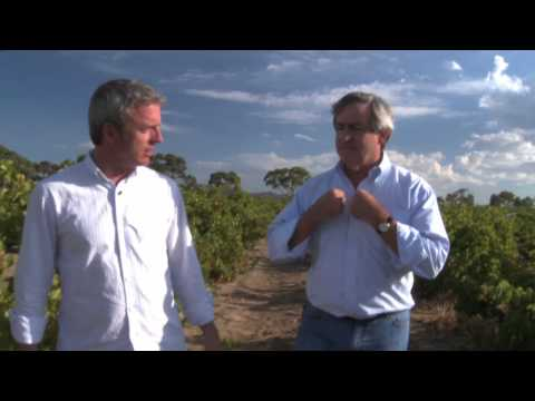Wine Sense TV - Grenache - A Risk Free Purchase and Pairing with the Grill