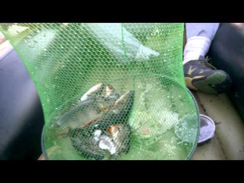 выборгский район запрет на рыбалку