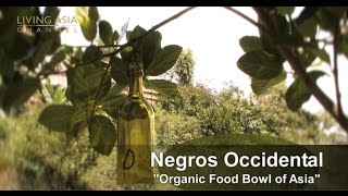 Negros Philippines  City new picture : Organic Farming in the Philippines: Living Asia Channel Documentary Organic Negros Occidental