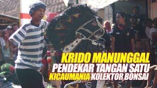 Video KRIDO MANUNGGAL #1 : Pendekar Tangan Satu KICAUMANIA MURAI EKOR HITAM Ramaikan Jathilan Bersih Desa MP3, 3GP, MP4, WEBM, AVI, FLV Agustus 2019