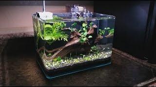 3 gallon nano setup
