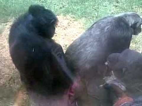 Monkey mating with game