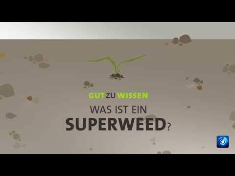 Was ist Superweed?