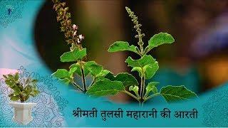 Prayers to Tulsi Maharani with Lyrics   Tulsi Aarti