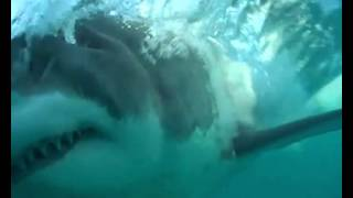 Gansbaai South Africa  City new picture : Shark Cage Diving, Gansbaai, South Africa