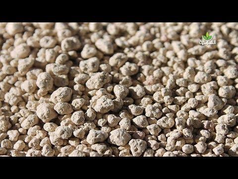 جولة الفلاحية | مرة أخرى السيلسيوم يُثْبِتُ فاعليته في الرفع من مستوى الإنتاج وتحسين جودة المزروعات