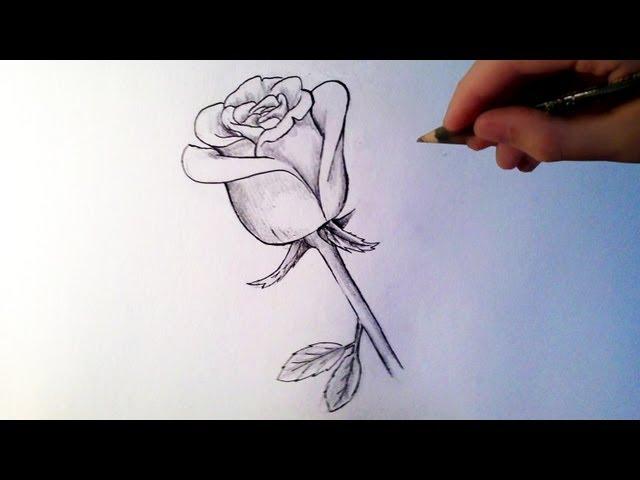 Comment dessiner une rose tutoriel dessin facile comment dessiner une rose chris dessine - Tuto dessin facile ...
