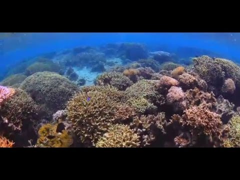 Baby corals, fish sniff out bad reefs (YouTube video)