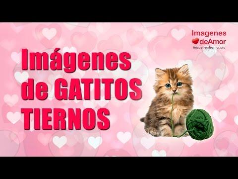 Frases lindas - 8 Imágenes de gatitos tiernos con lindas frases de amor