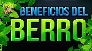 El Berro Spain  City pictures : Para Que Sirve El Berro - Propiedades, Beneficios Y Contraindicaciones Del Berro