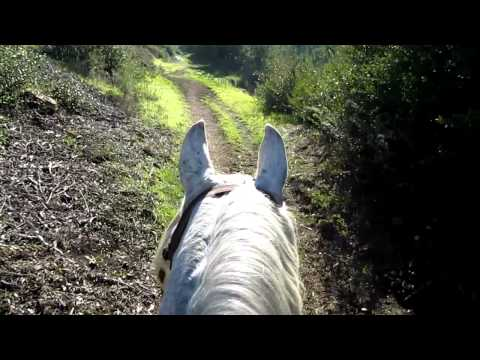 Riding Syd