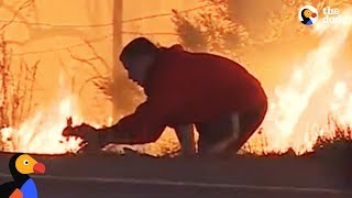 Man Saves Rabbit From Fire in California | The Dodo