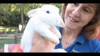 All about Rabbits: What Is a Dwarf Rabbit?