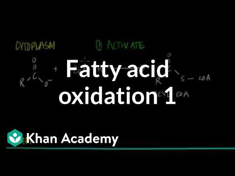 Fatty Acid Oxidation - Part I