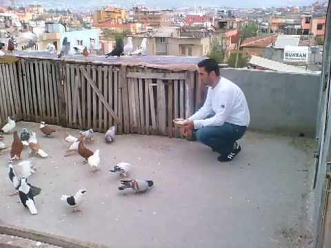 حمام احمد الملكاوي كشيش مر2