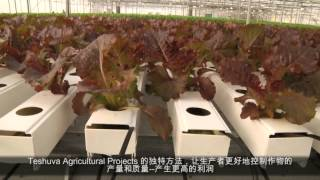 Hydroponics in China - Teshuva Agricultural Projects