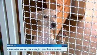 Canil Municipal de Marília faz campanha de adoção de cães e gatos
