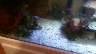 Download Lagu How to stop Cichlids from always hiding! Mp3