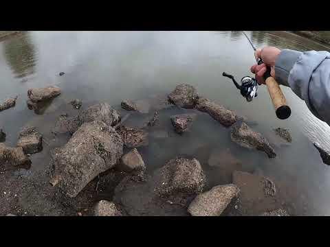 Sandywool Lake, Ed Levin Fishing Report January 2021