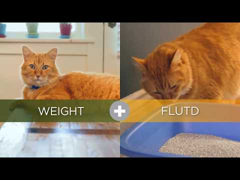 Nutrition - Hills Metabolic+Urinary