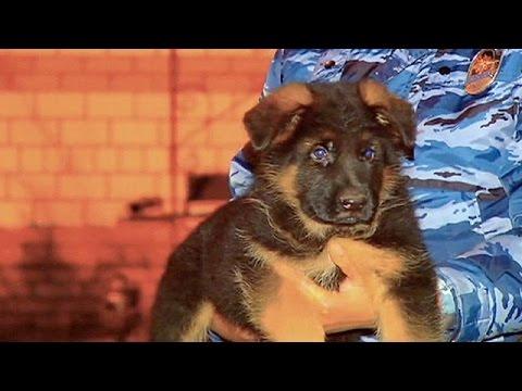 Η Ρωσία προσφέρει στη Γαλλία έναν σκύλο, μετά τον θάνατο της Diesel