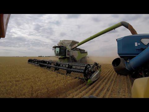 'Harvest 2020'