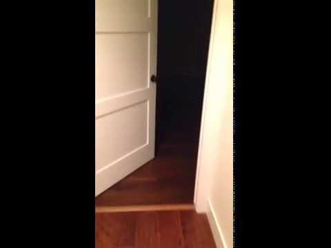Cosa fa un cane da solo nel buio ?
