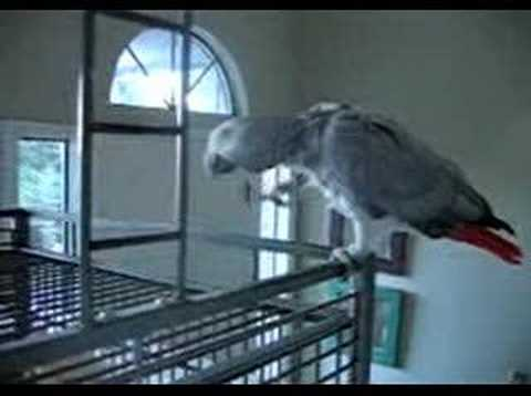 Very Talkative Parrot